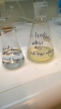 7. water and isopropanol layers after extraction