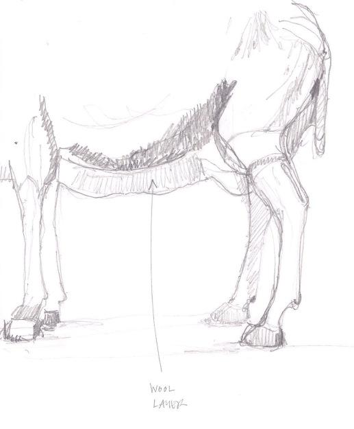sheep drawing 05